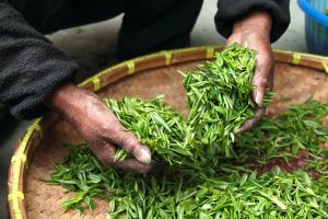 お茶 食前に どくだみ茶、食後 緑茶が 腸にはベスト