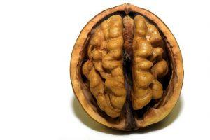 日本人は脳が発達しても 「 拡大発展病 」 にならなかった